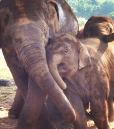 Why visiting the Elephant Nature Park should be on your bucket list